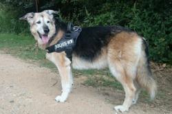 KIRA - 14 anys. Adoptada al CAAC.